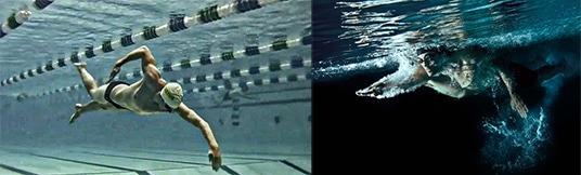nager le crawl en glisse